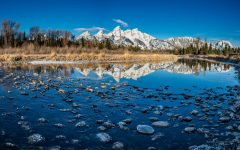 A Schwabacher Morning